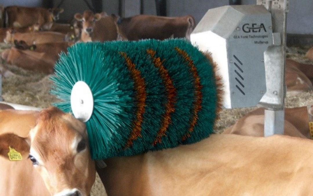 Cepillos para vacas