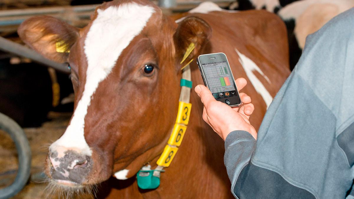 DairyFarming_Tecnologia-de-datos2